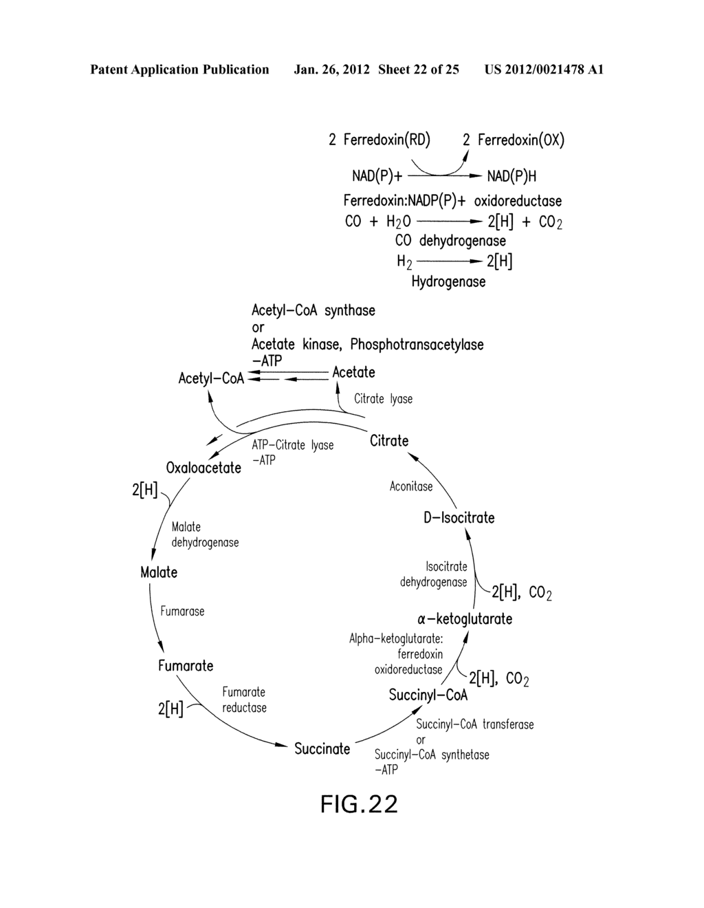 MICROORGANISMS AND METHODS FOR THE BIOSYNTHESIS OF AROMATICS,     2,4-PENTADIENOATE AND 1,3-BUTADIENE - diagram, schematic, and image 23