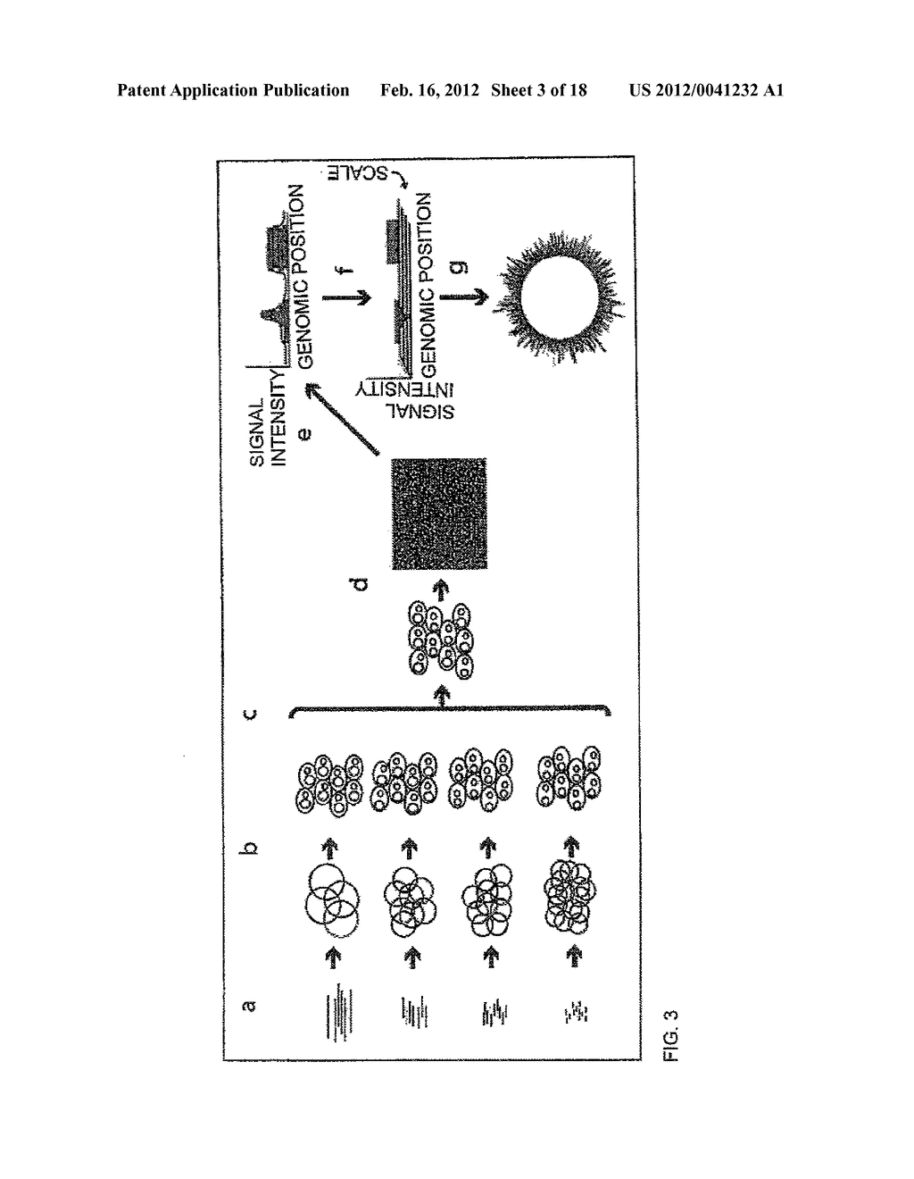 COMPOSITIONS AND METHODS FOR 3-HYDROXYPROPIONATE BIO-PRODUCTION FROM     BIOMASS - diagram, schematic, and image 04