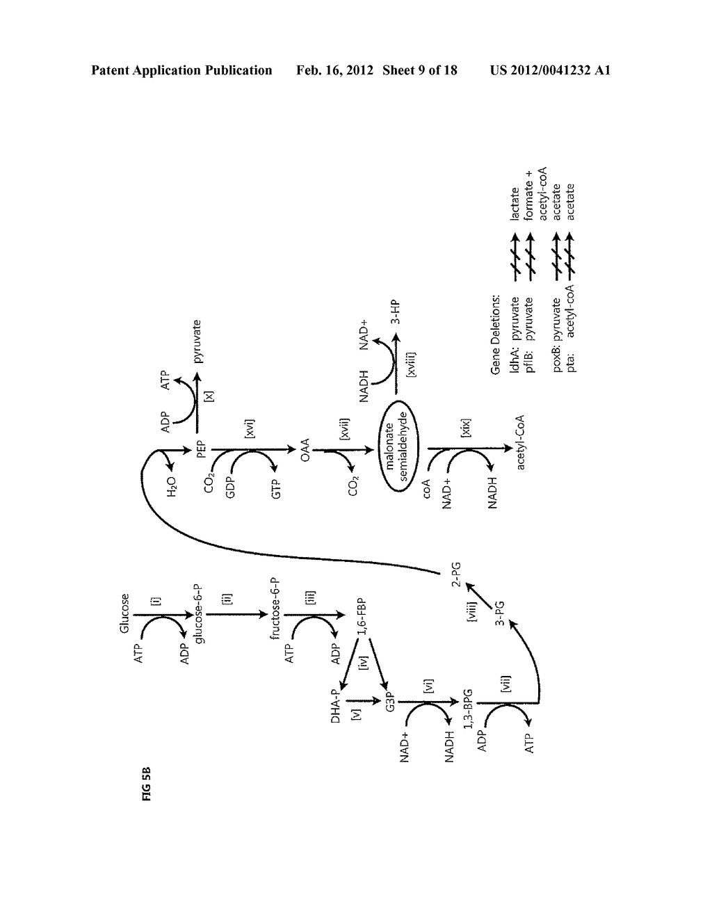 COMPOSITIONS AND METHODS FOR 3-HYDROXYPROPIONATE BIO-PRODUCTION FROM     BIOMASS - diagram, schematic, and image 10