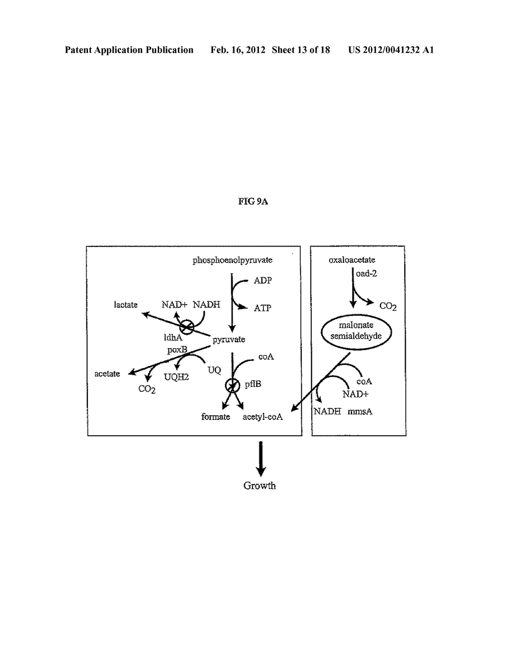 COMPOSITIONS AND METHODS FOR 3-HYDROXYPROPIONATE BIO-PRODUCTION FROM     BIOMASS - diagram, schematic, and image 14