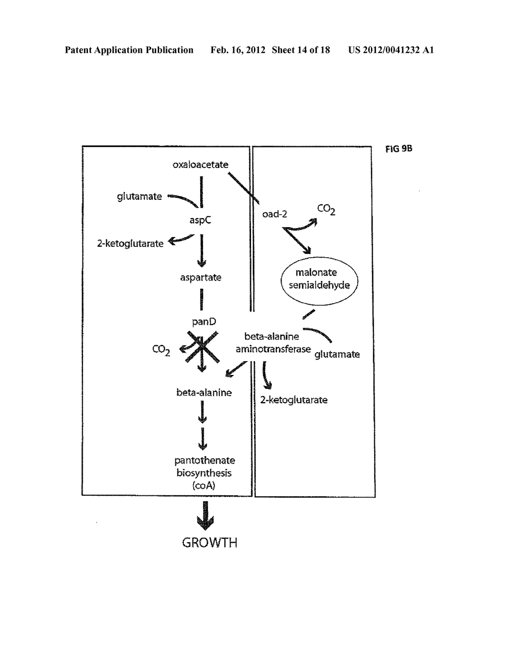 COMPOSITIONS AND METHODS FOR 3-HYDROXYPROPIONATE BIO-PRODUCTION FROM     BIOMASS - diagram, schematic, and image 15