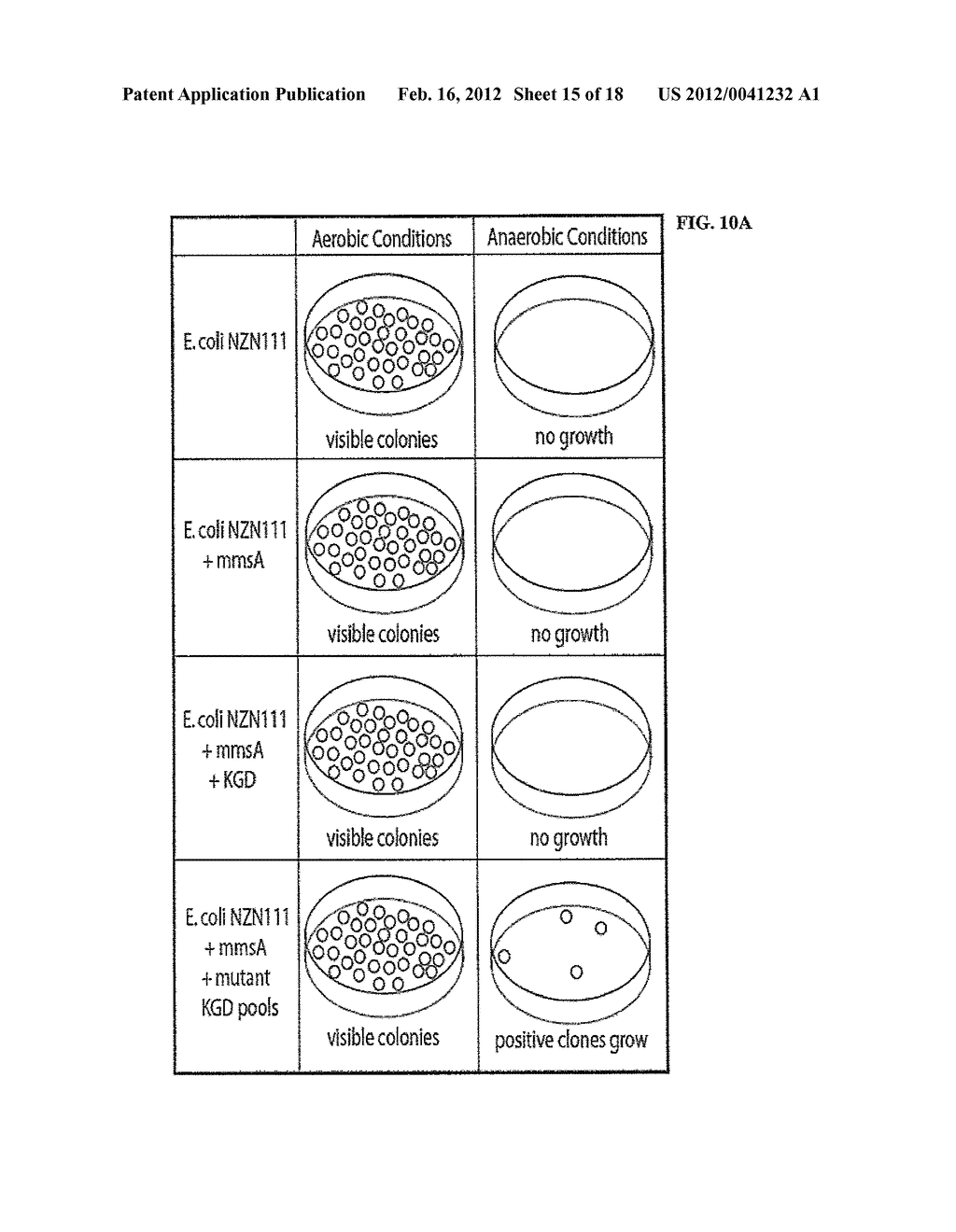 COMPOSITIONS AND METHODS FOR 3-HYDROXYPROPIONATE BIO-PRODUCTION FROM     BIOMASS - diagram, schematic, and image 16