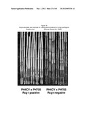 Polynucleotides and methods for making plants resistant to fungal     pathogens diagram and image