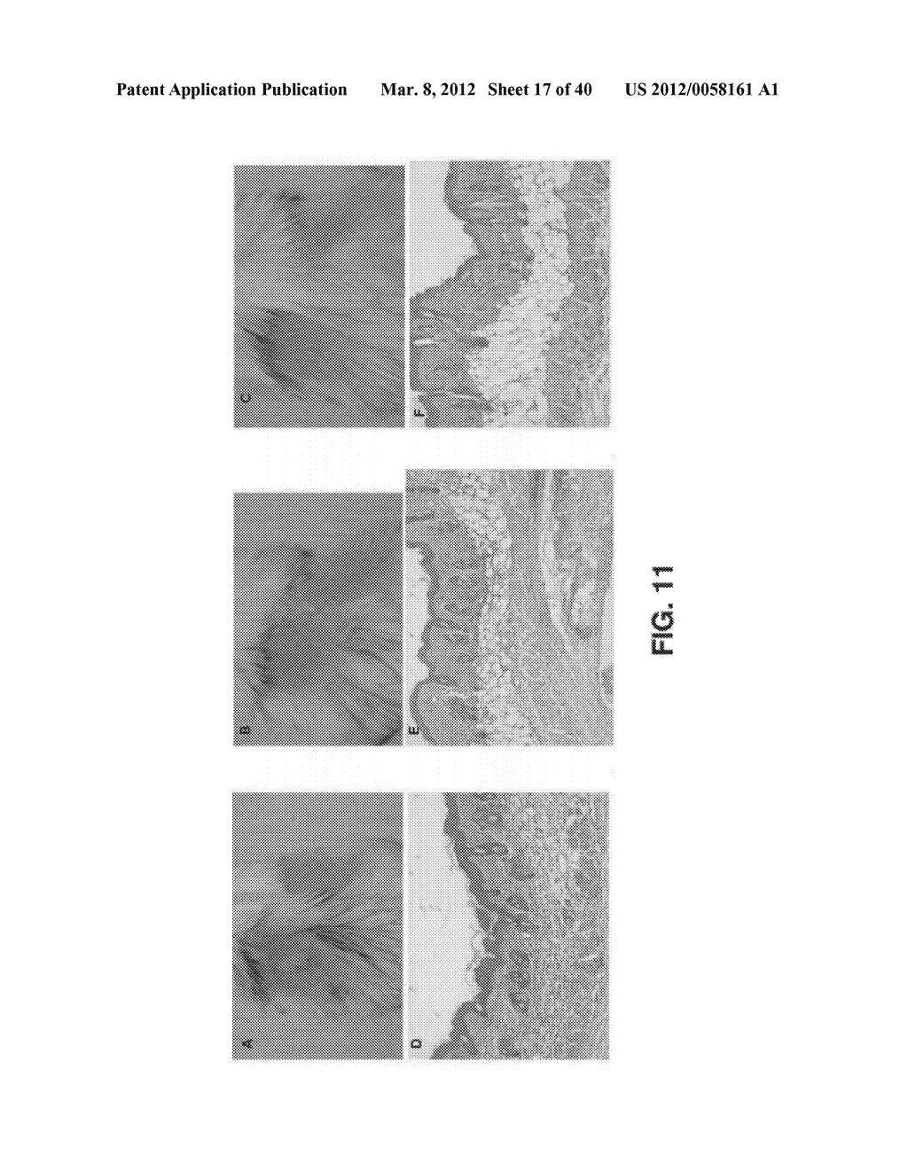 ALKYLATED SEMI SYNTHETIC GLYCOSAMINOGLYCOSAN ETHERS, AND METHODS FOR     MAKING AND USING THEREOF - diagram, schematic, and image 18