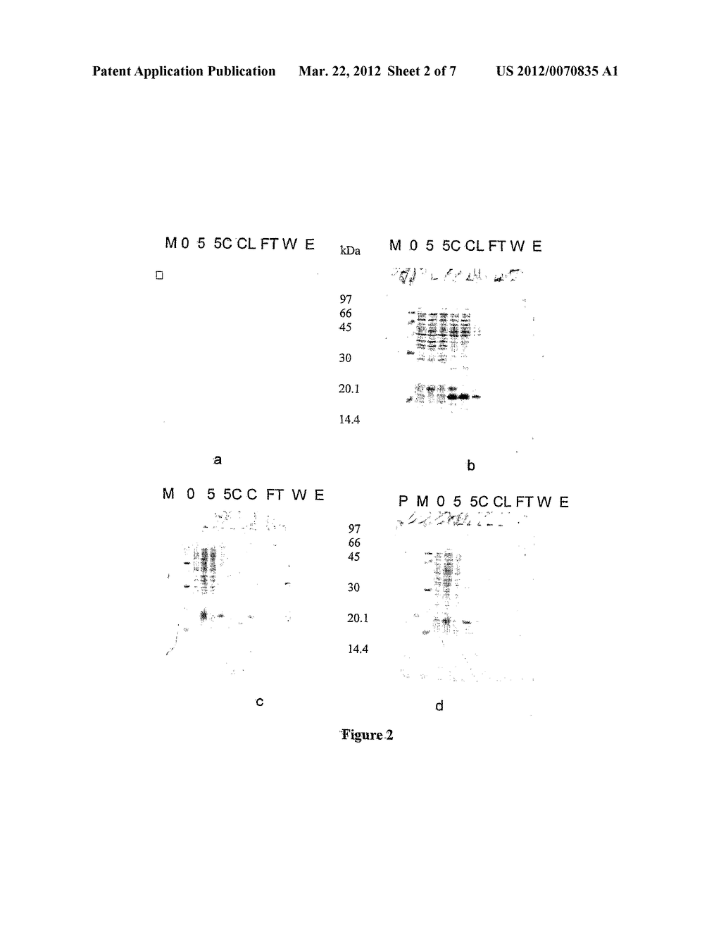 Method of Cloning Stable Stress Tolerant Superoxide Dismutase Using     Universal Primers - diagram, schematic, and image 03