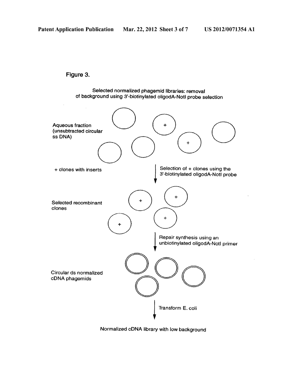 NORMALIZED NUCLEIC ACID LIBRARIES AND METHODS OF PRODUCTION THEREOF - diagram, schematic, and image 04