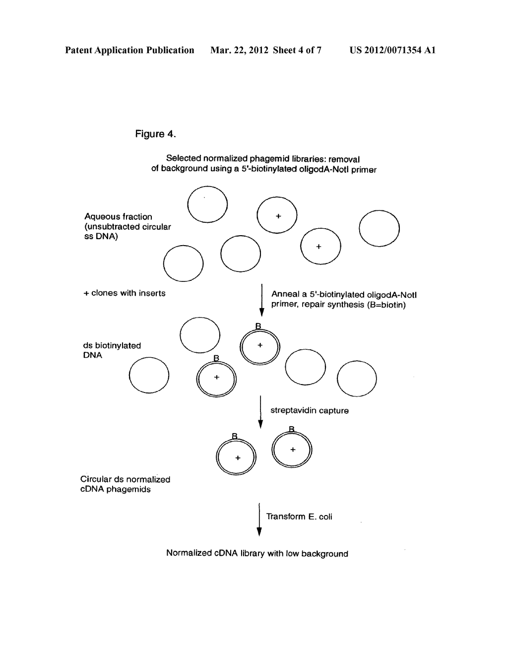 NORMALIZED NUCLEIC ACID LIBRARIES AND METHODS OF PRODUCTION THEREOF - diagram, schematic, and image 05