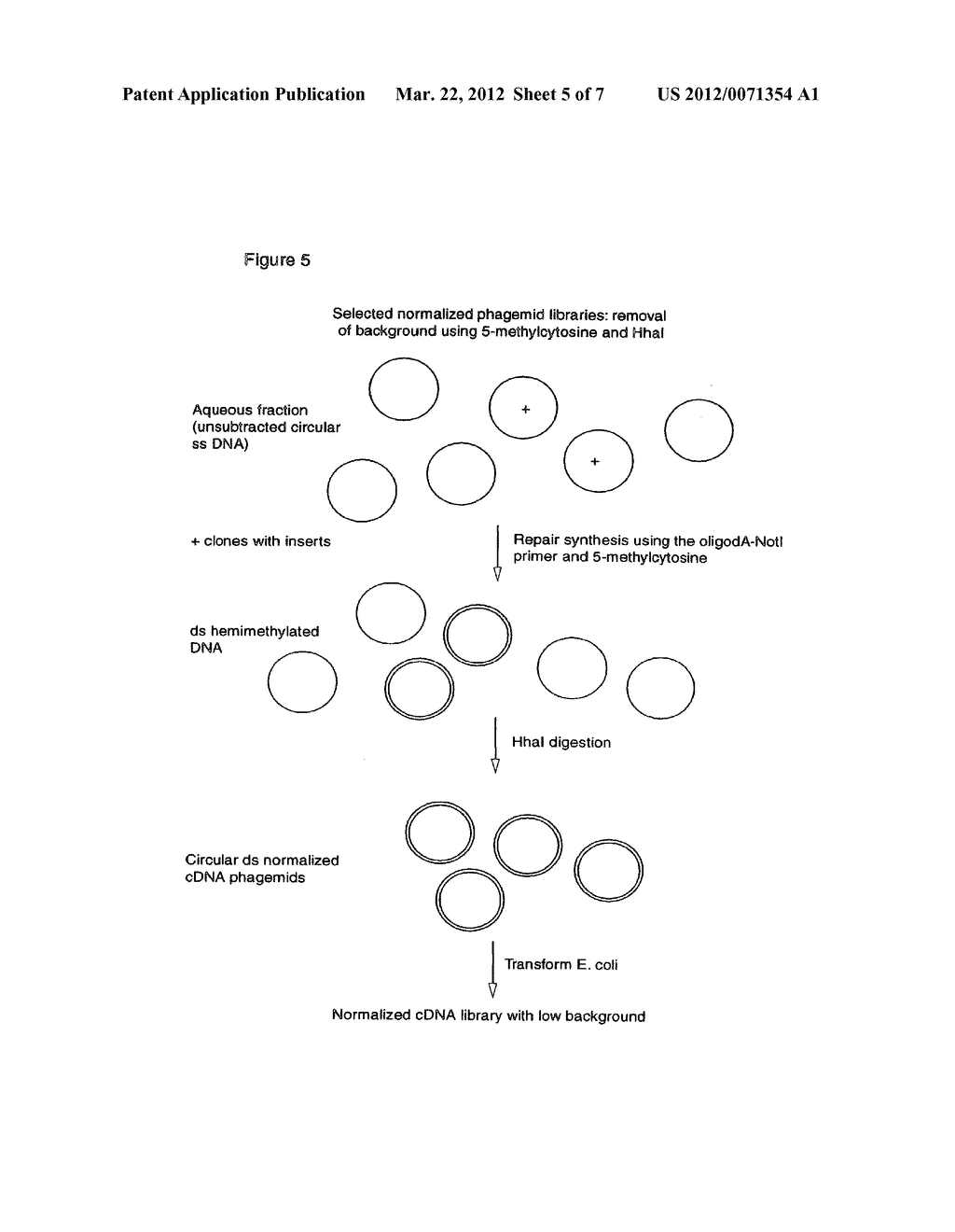 NORMALIZED NUCLEIC ACID LIBRARIES AND METHODS OF PRODUCTION THEREOF - diagram, schematic, and image 06