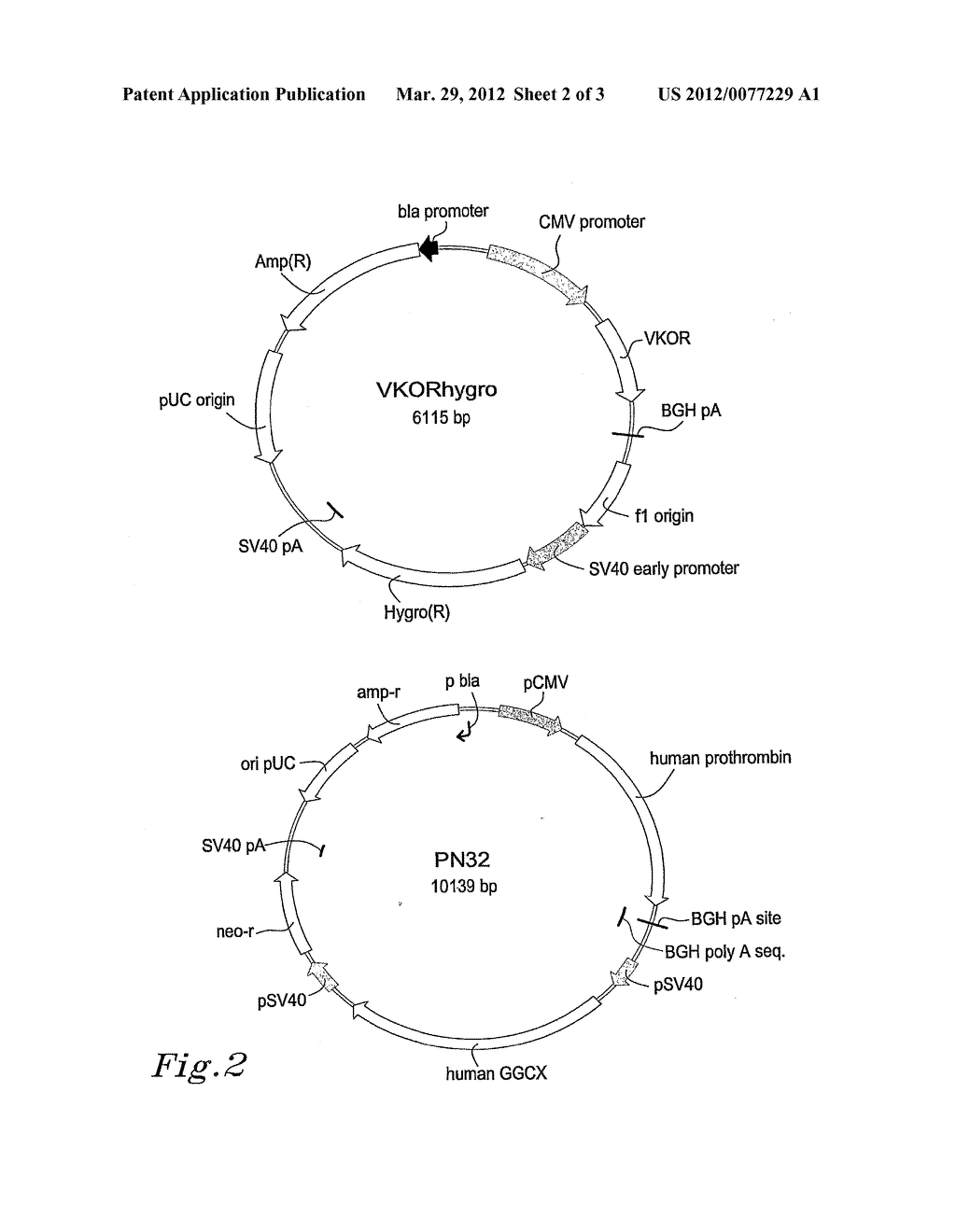 Compositions and methods relating to proteins requiring     Gamma-Carboxylation - diagram, schematic, and image 03