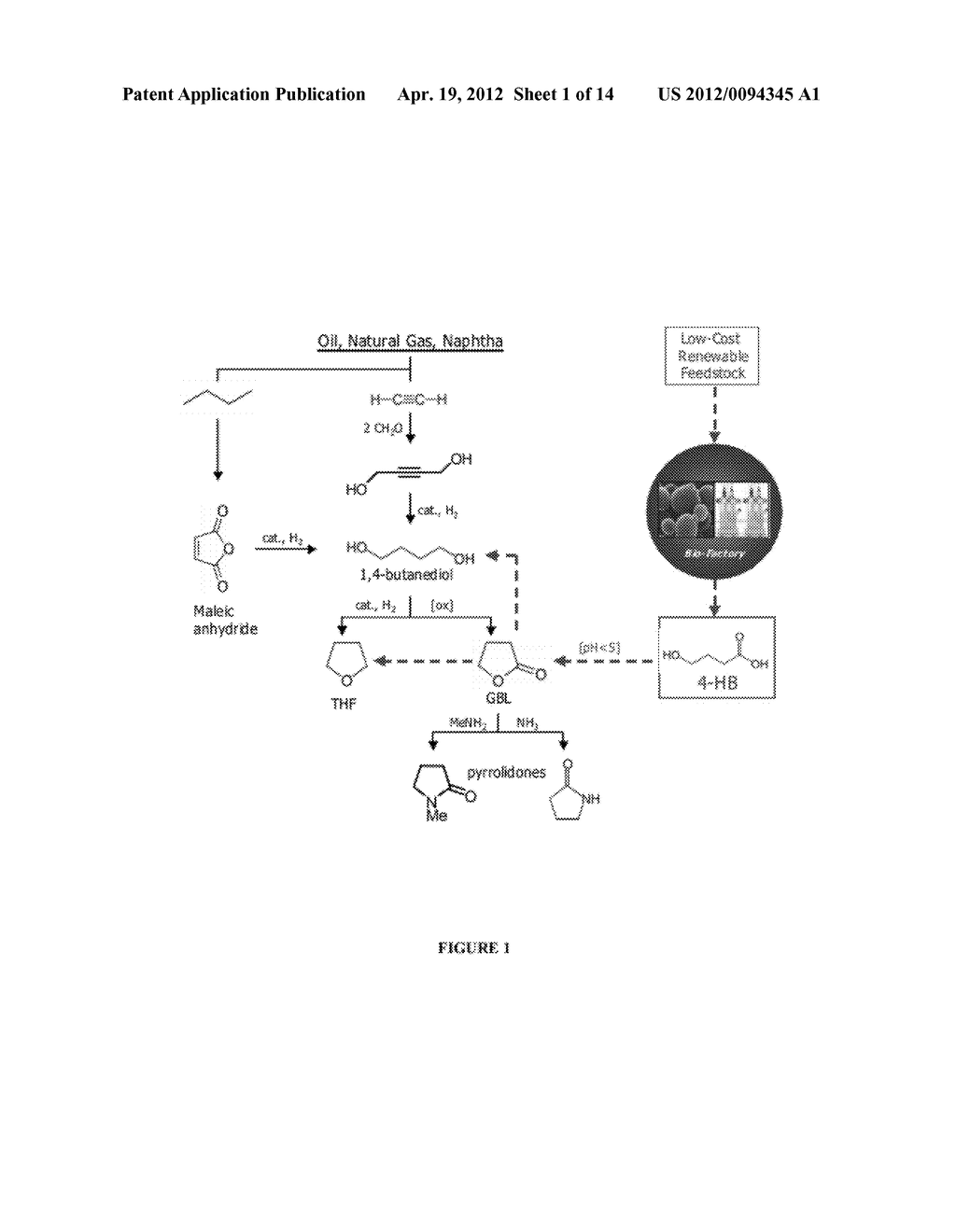 COMPOSITIONS AND METHODS FOR THE BIOSYNTHESIS OF 1,4-BUTANEDIOL AND ITS     PRECURSORS - diagram, schematic, and image 02