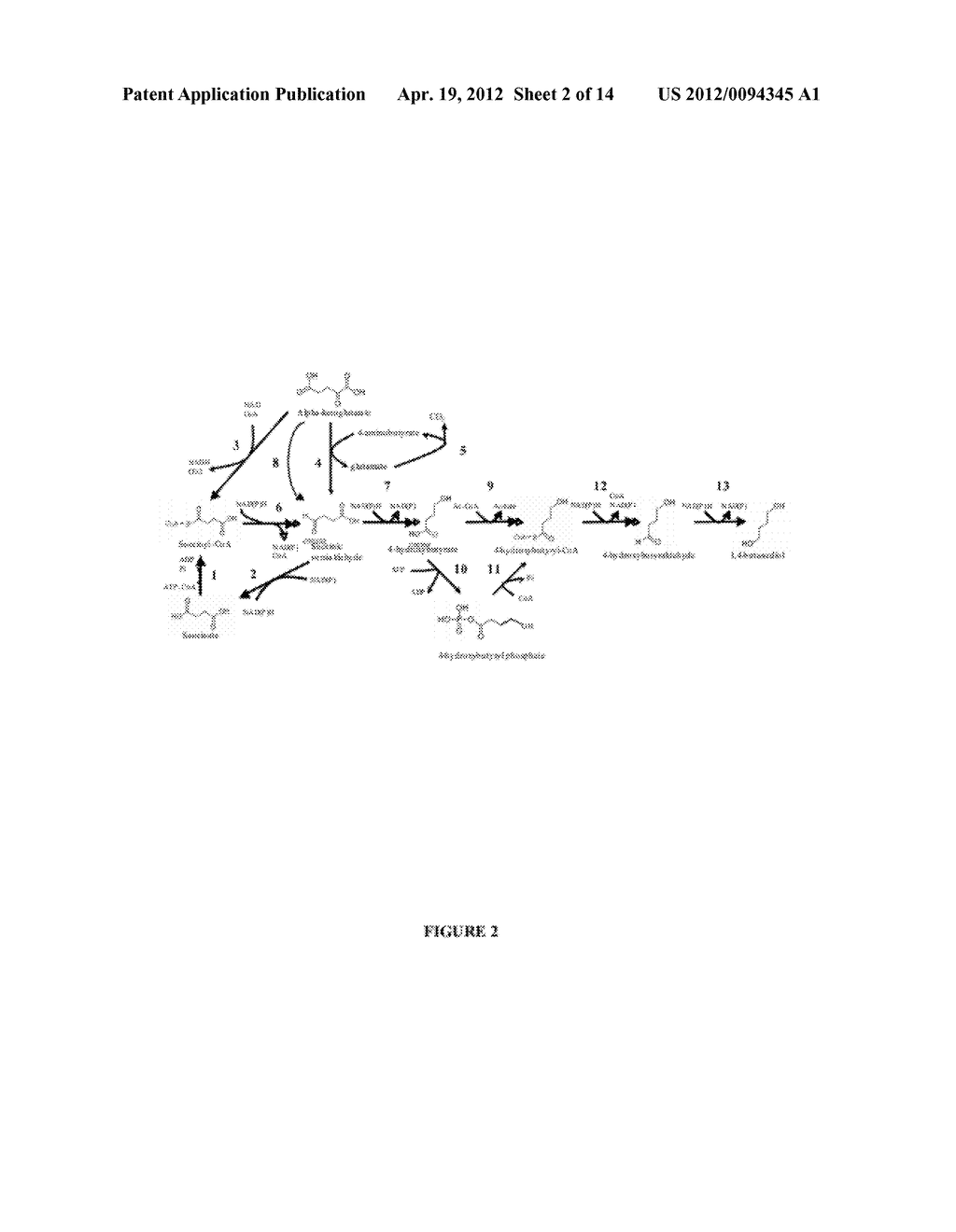 COMPOSITIONS AND METHODS FOR THE BIOSYNTHESIS OF 1,4-BUTANEDIOL AND ITS     PRECURSORS - diagram, schematic, and image 03