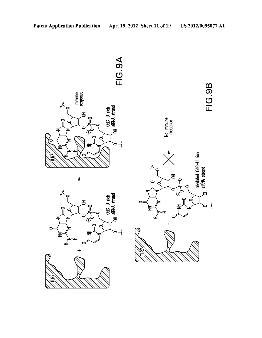 METHODS AND COMPOSITIONS RELATED TO MODIFIED GUANINE BASES FOR CONTROLLING     OFF-TARGET EFFECTS IN RNA INTERFERENCE - diagram, schematic, and image 12