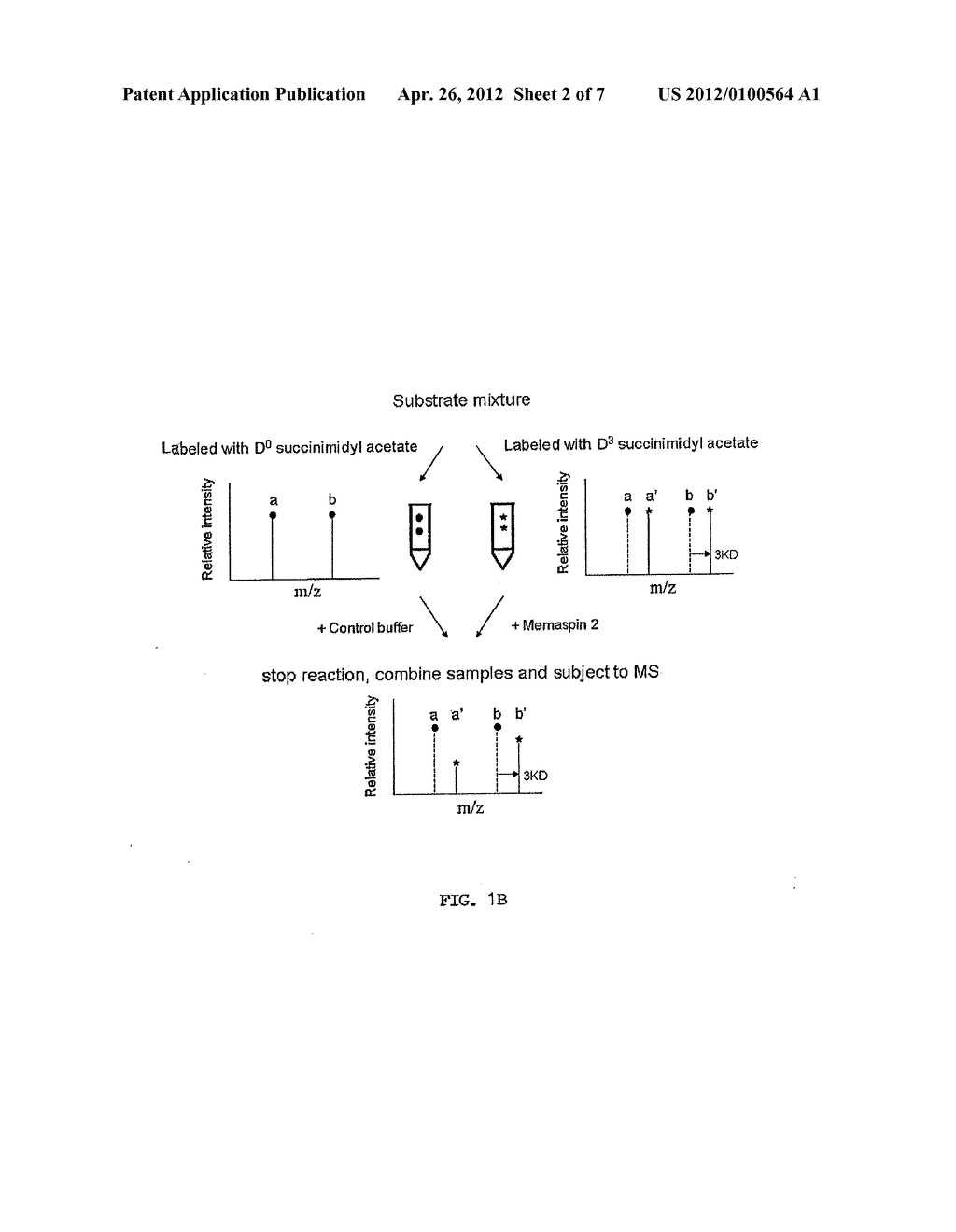 Prediction of Memapsin 2 Cleavage Sites - diagram, schematic, and image 03