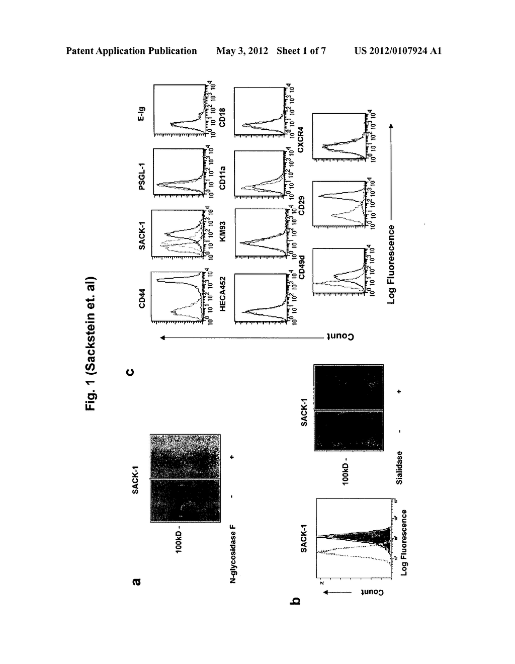COMPOSITIONS AND METHODS FOR MODIFYING CELL SURFACE GLYCANS - diagram, schematic, and image 02