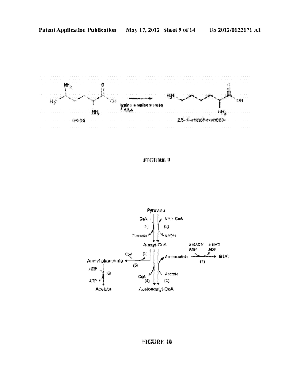 COMPOSITIONS AND METHODS FOR THE BIOSYNTHESIS OF 1,4-BUTANEDIOL AND ITS     PRECURSORS - diagram, schematic, and image 10