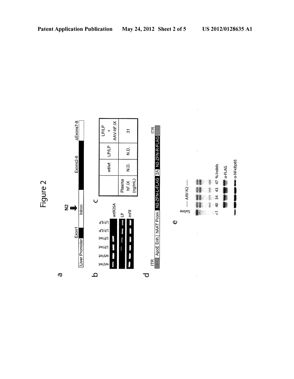 METHODS AND COMPOSITIONS FOR TREATING HEMOPHILIA B - diagram, schematic, and image 03