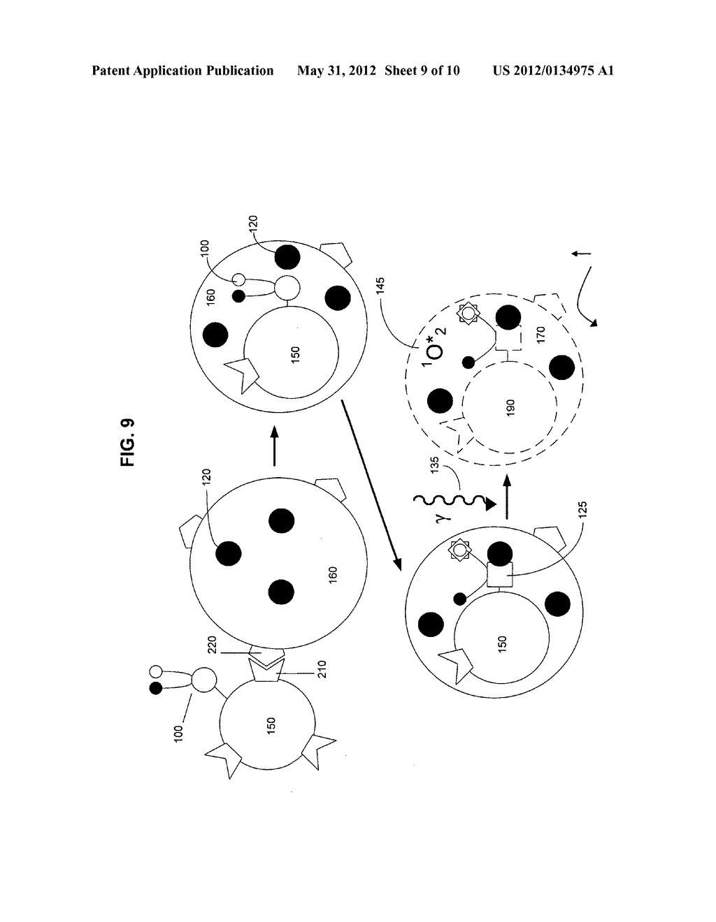 Biological targeting compositions and methods of using the same - diagram, schematic, and image 10