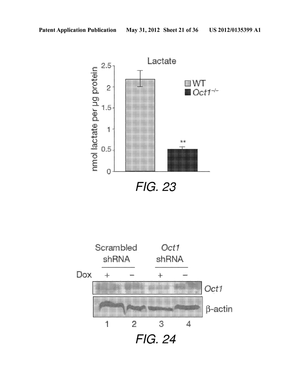 CANCER BIOMARKER AND METHODS OF USING THEREOF - diagram, schematic, and image 22