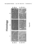 METHOD OF INCREASING IMMUNOLOGICAL EFFECT diagram and image