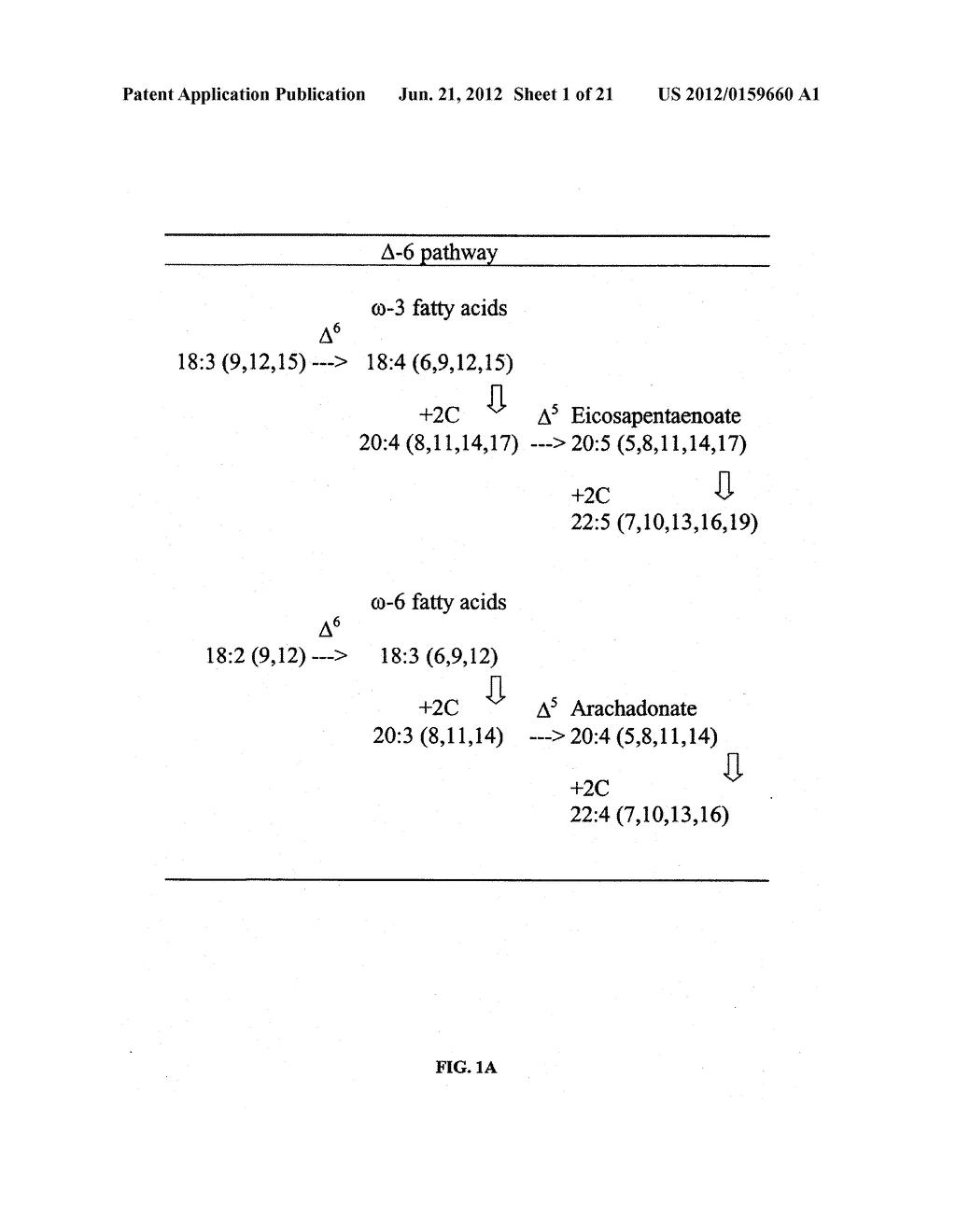 DESATURASES AND METHODS OF USING THEM FOR SYNTHESIS OF POLYUNSATURATED     FATTY ACIDS - diagram, schematic, and image 02