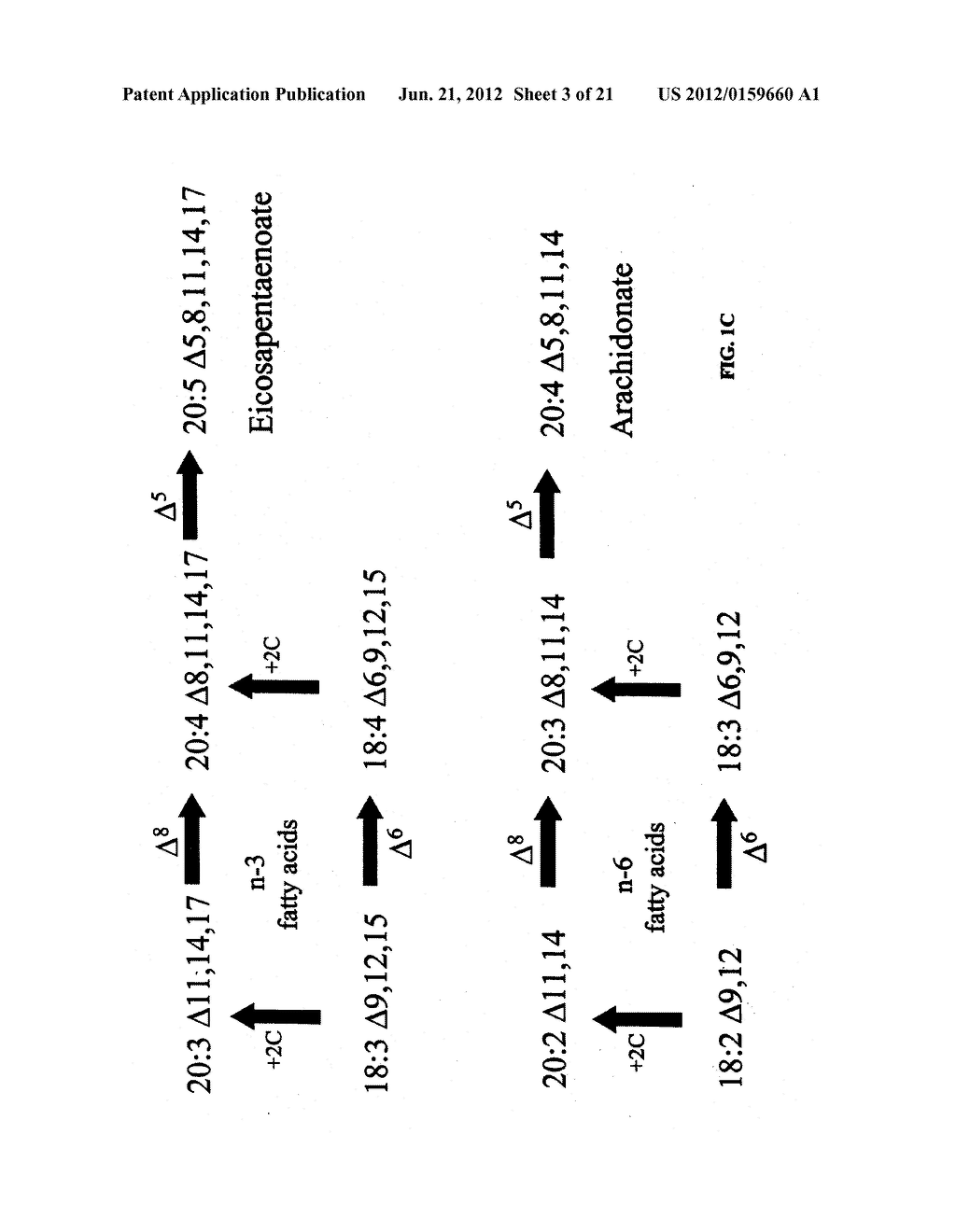 DESATURASES AND METHODS OF USING THEM FOR SYNTHESIS OF POLYUNSATURATED     FATTY ACIDS - diagram, schematic, and image 04