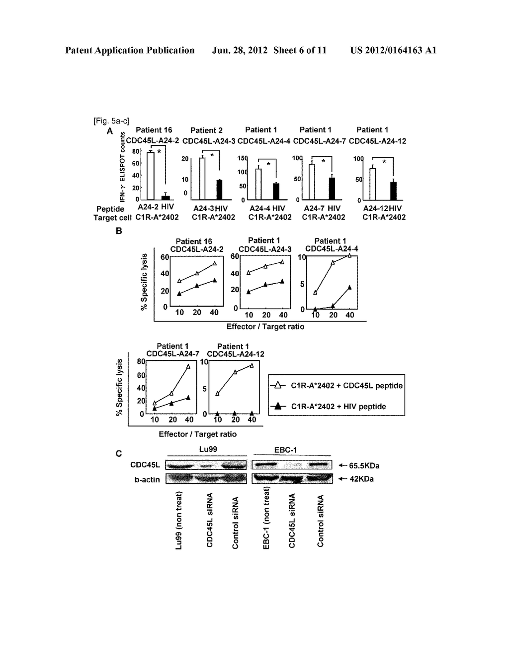 CDC45L PEPTIDES AND VACCINES INCLUDING THE SAME - diagram, schematic, and image 07