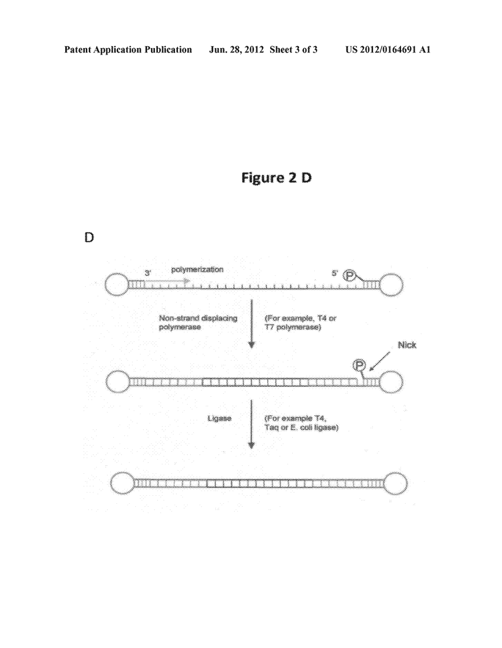 COMPOSITIONS AND METHODS FOR PRODUCING SINGLE-STRANDED CIRCULAR DNA - diagram, schematic, and image 04