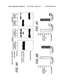 ANTISENSE OLIGONUCLEOTIDES THAT TARGET A CRYPTIC SPLICE SITE IN USH1C AS A     THERAPEUTIC FOR USHER SYNDROME diagram and image