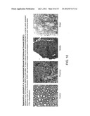 Methods Of Engineering Neural Tissue diagram and image