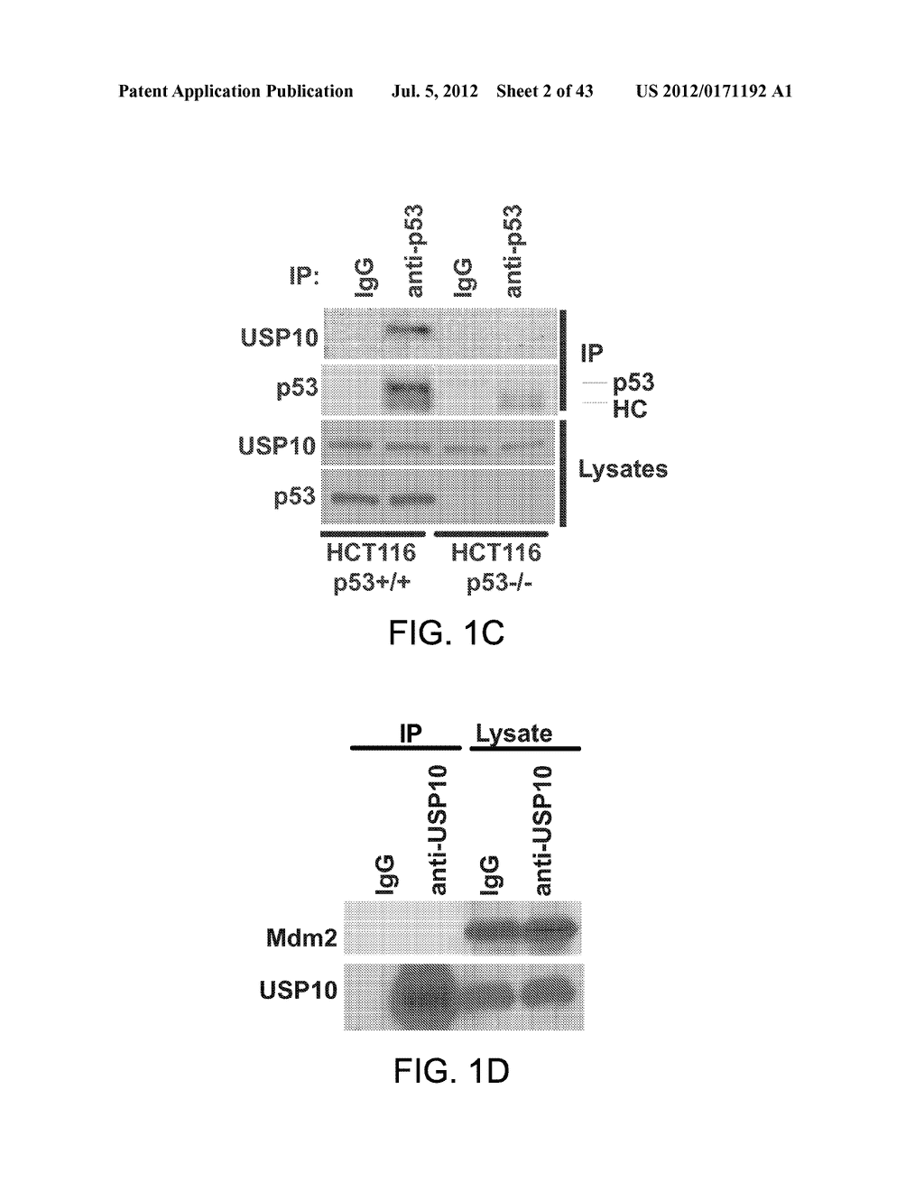 METHODS AND MATERIALS FOR MODULATING DEUBIQUITINASES AND UBIQUITINATED     POLYPEPTIDES - diagram, schematic, and image 03