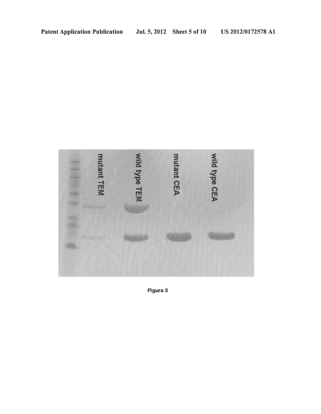 FUNCTIONAL HEAVY CHAIN ANTIBODIES, FRAGMENTS THEREOF, LIBRARY THEREOF AND     METHODS OF PRODUCTION THEREOF - diagram, schematic, and image 06