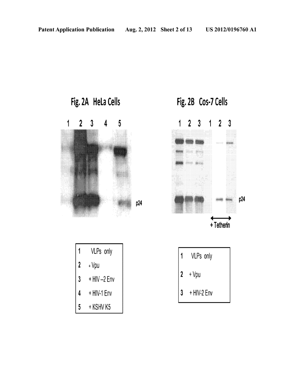 METHODS AND COMPOSITIONS FOR IDENTIFYING MODULATORS OF ANTI-TETHERIN     ACTIVITY TO INHIBIT PROPAGATION OF VIRUSES - diagram, schematic, and image 03