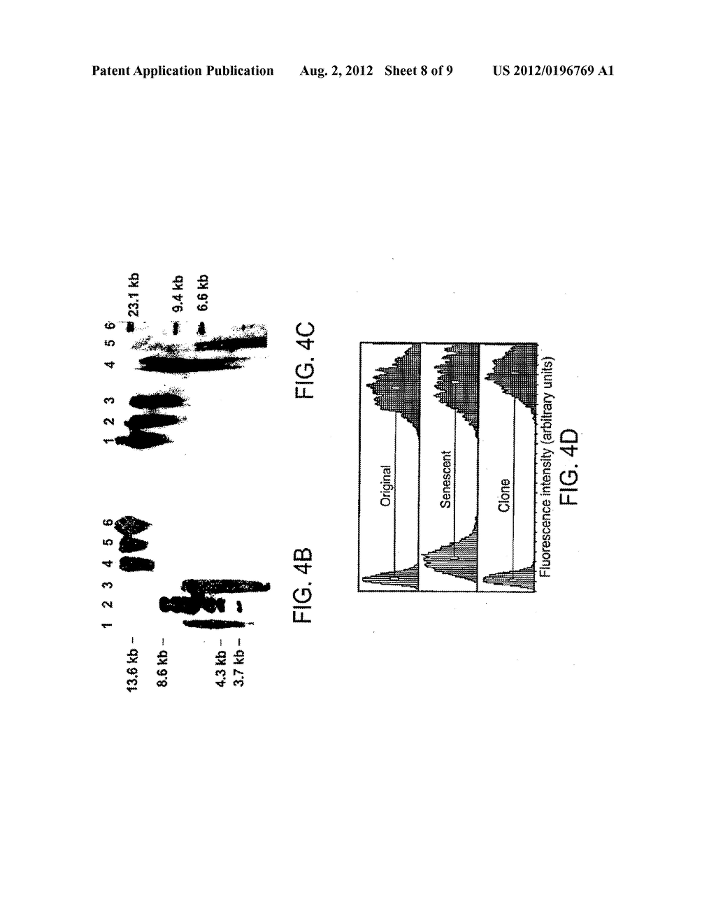 Methods of repairing tandemly repeated DNA sequences and extending cell     life-span using nuclear transfer - diagram, schematic, and image 09
