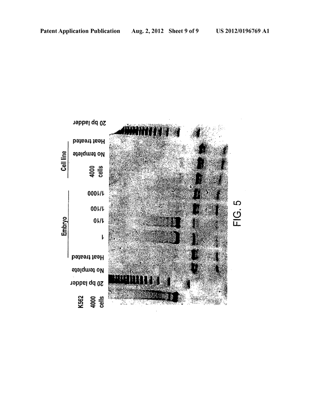 Methods of repairing tandemly repeated DNA sequences and extending cell     life-span using nuclear transfer - diagram, schematic, and image 10