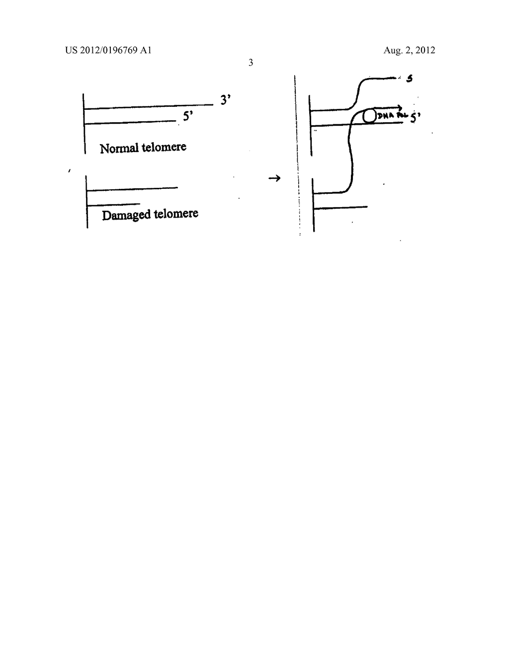 Methods of repairing tandemly repeated DNA sequences and extending cell     life-span using nuclear transfer - diagram, schematic, and image 13