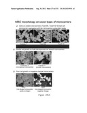 Microcarriers for Stem Cell Culture diagram and image