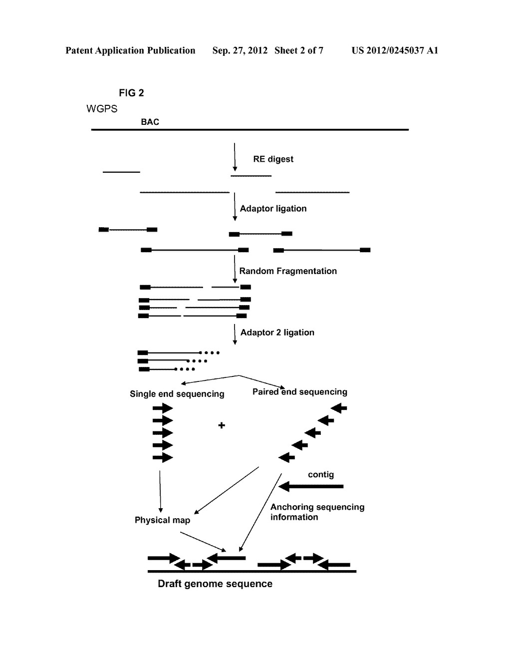 RESTRICTION ENZYME BASED WHOLE GENOME SEQUENCING - diagram, schematic, and image 03