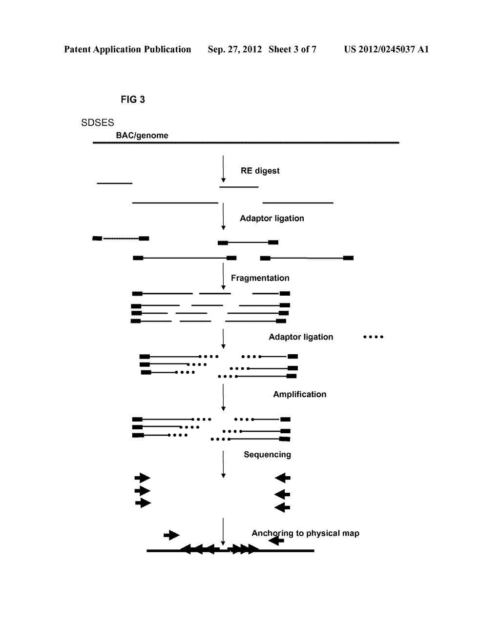 RESTRICTION ENZYME BASED WHOLE GENOME SEQUENCING - diagram, schematic, and image 04