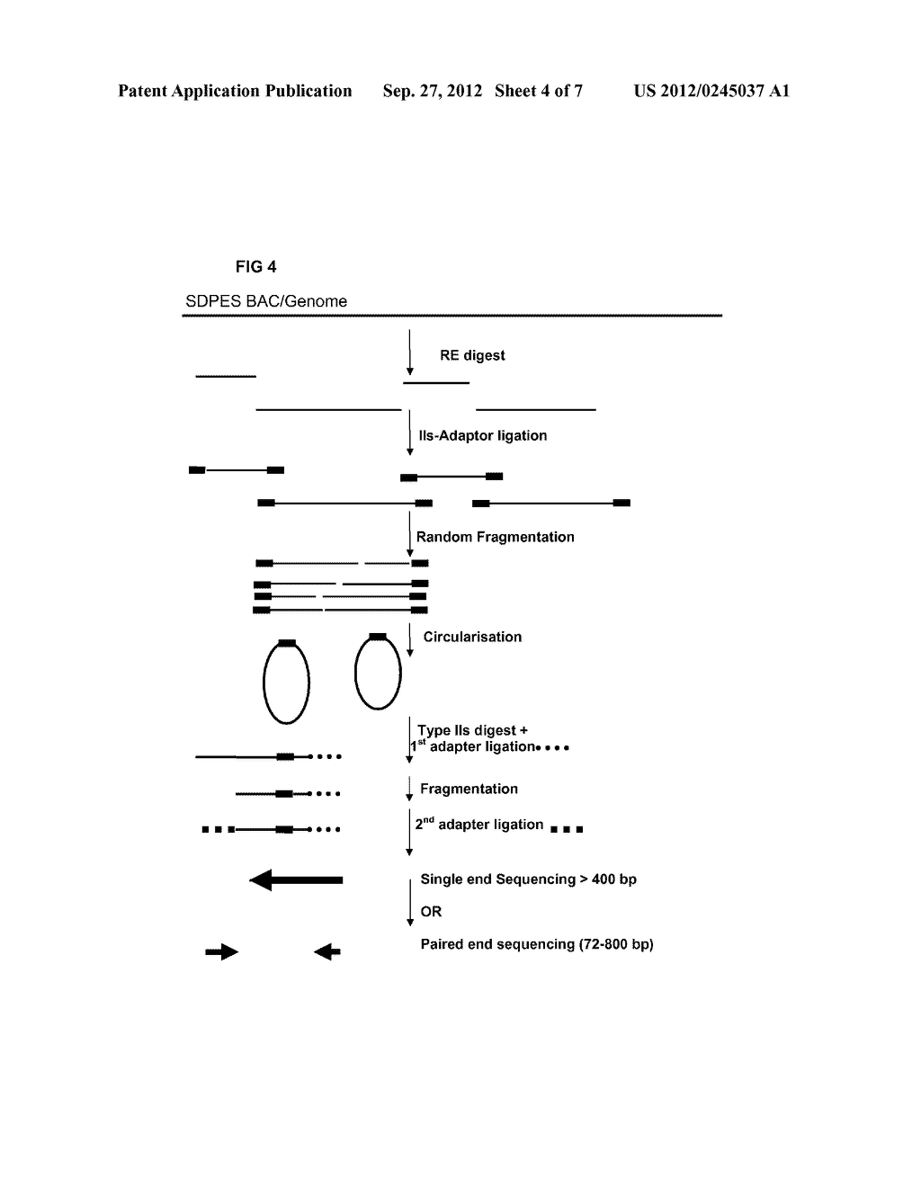 RESTRICTION ENZYME BASED WHOLE GENOME SEQUENCING - diagram, schematic, and image 05
