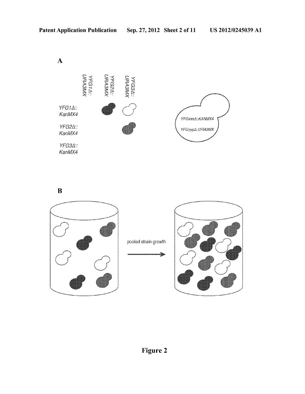 Entangled Mate Sequencing - diagram, schematic, and image 03