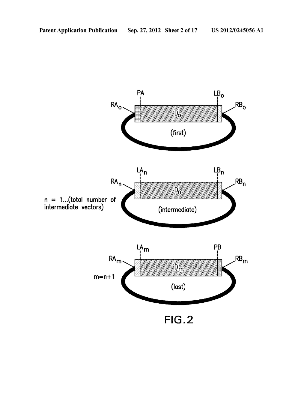 COMPOSITIONS AND METHODS FOR THE SAME ASSEMBLY OF POLYNUCLEOTIDES - diagram, schematic, and image 03