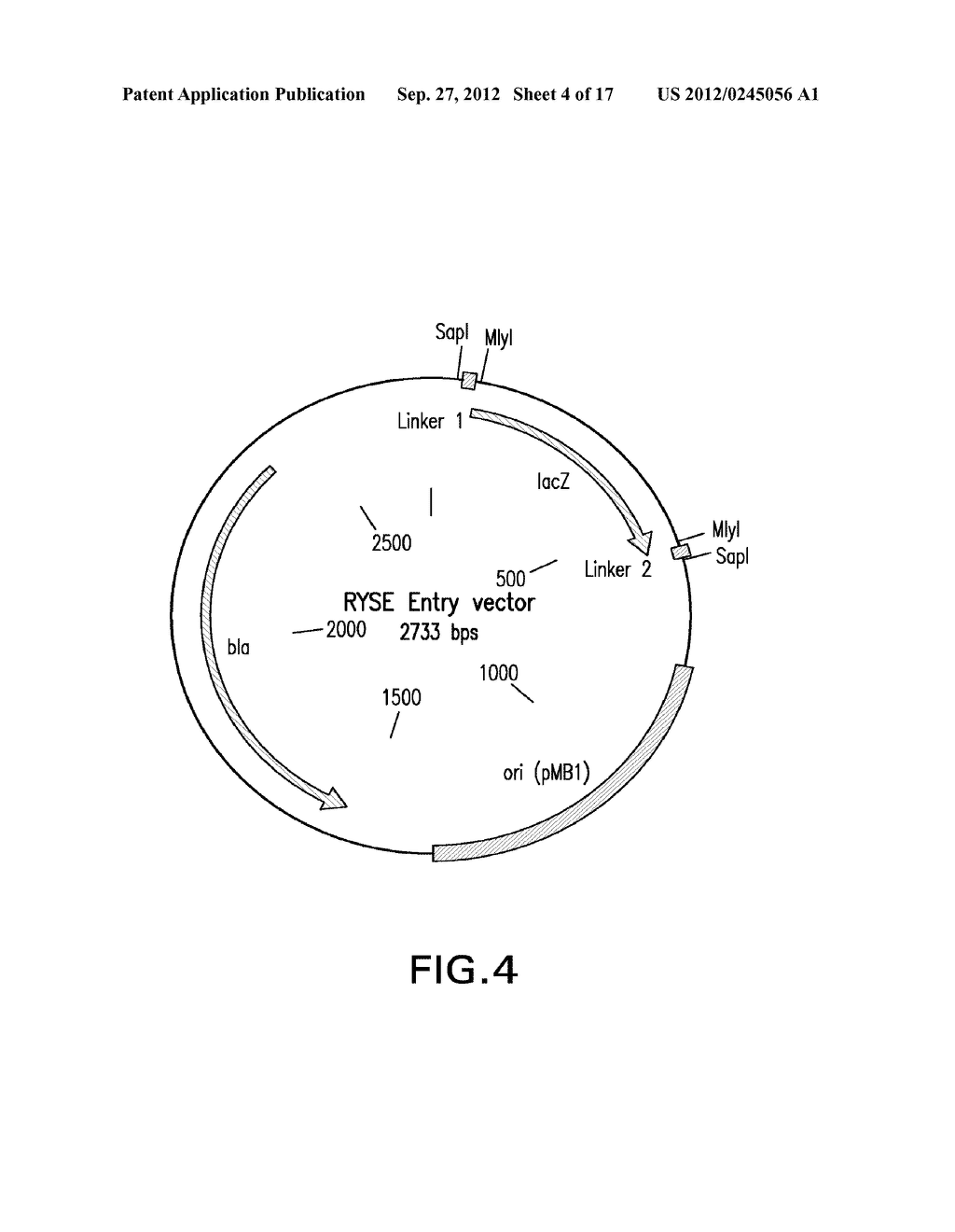 COMPOSITIONS AND METHODS FOR THE SAME ASSEMBLY OF POLYNUCLEOTIDES - diagram, schematic, and image 05