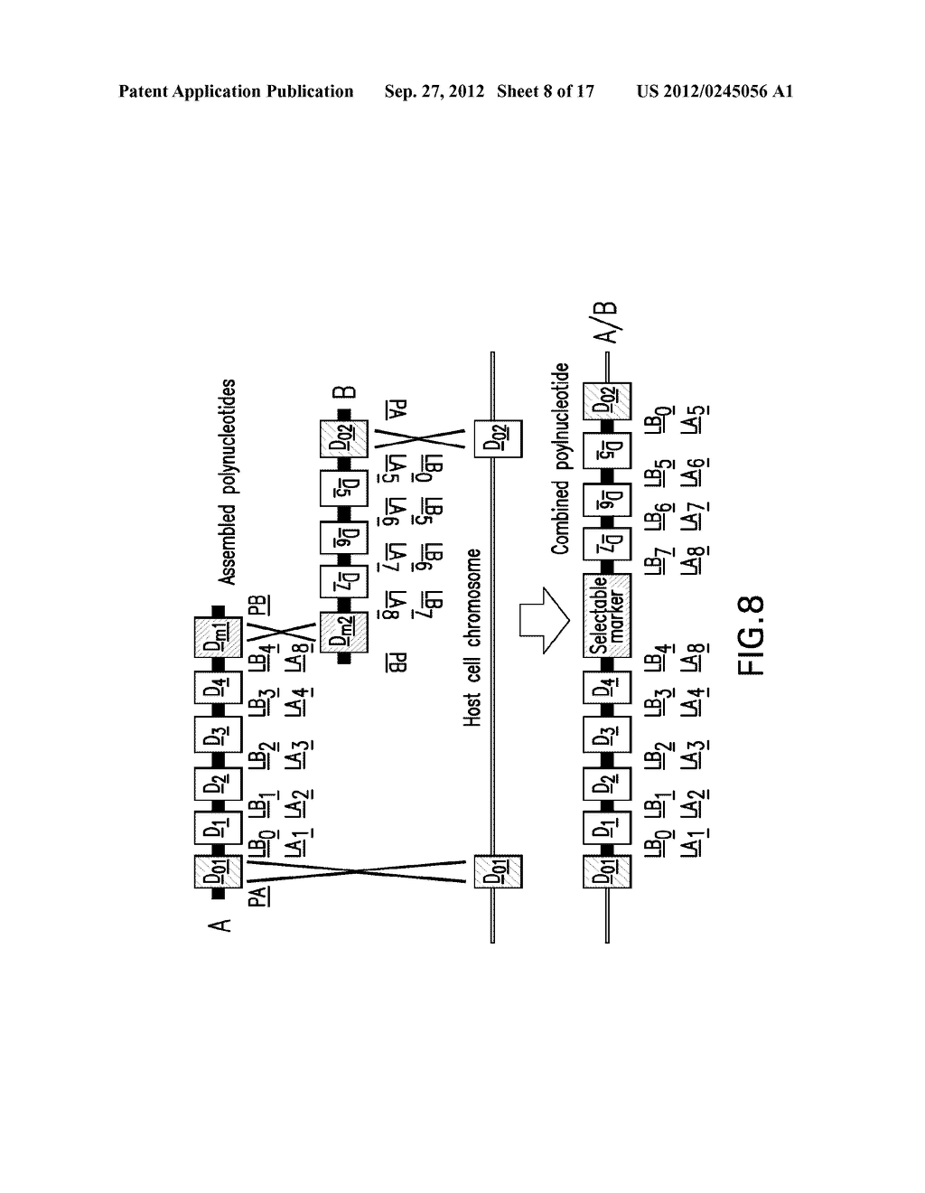 COMPOSITIONS AND METHODS FOR THE SAME ASSEMBLY OF POLYNUCLEOTIDES - diagram, schematic, and image 09