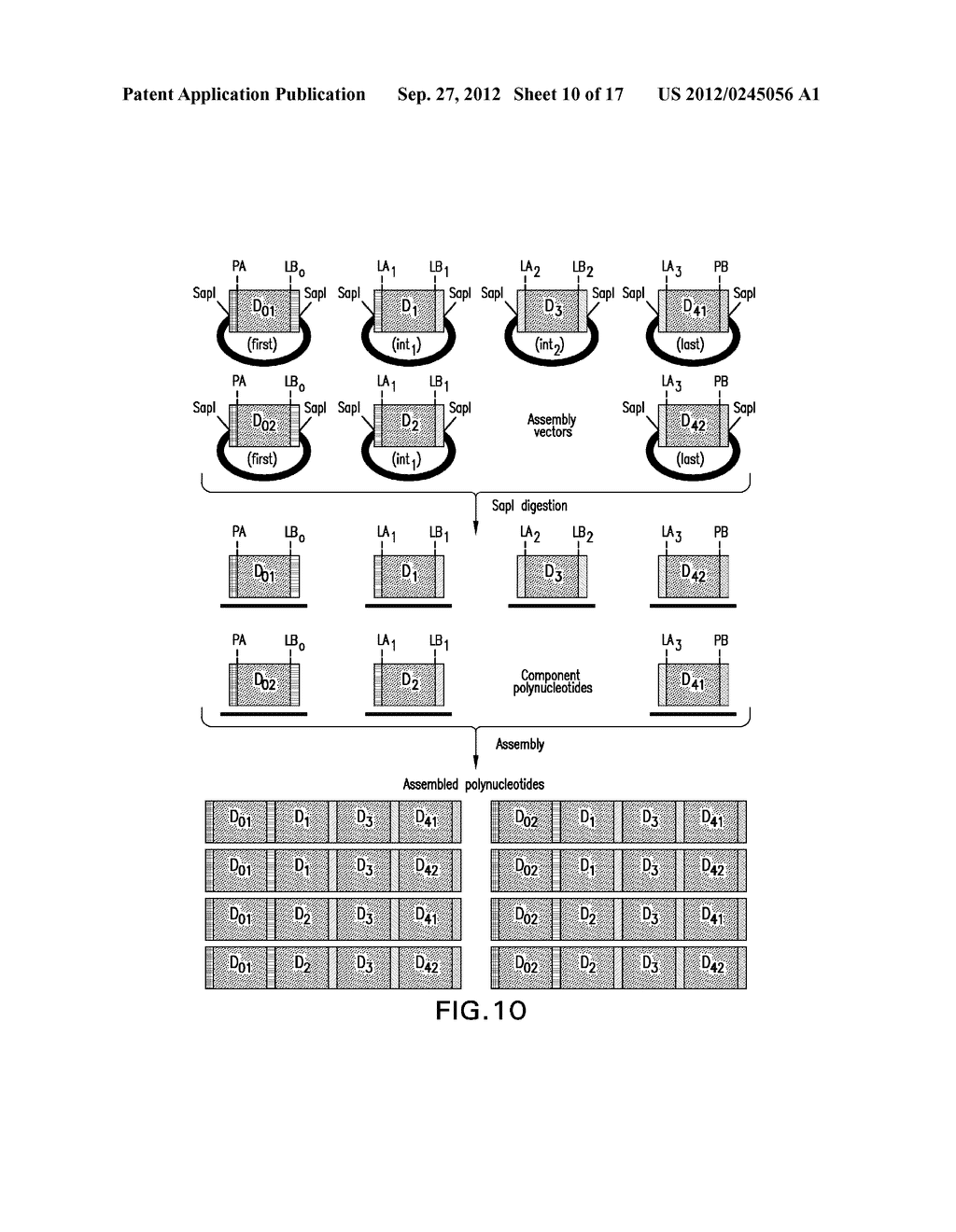 COMPOSITIONS AND METHODS FOR THE SAME ASSEMBLY OF POLYNUCLEOTIDES - diagram, schematic, and image 11