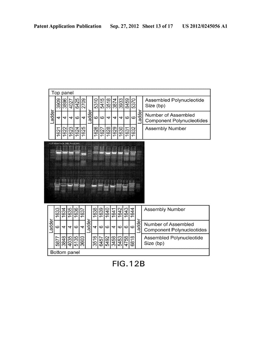 COMPOSITIONS AND METHODS FOR THE SAME ASSEMBLY OF POLYNUCLEOTIDES - diagram, schematic, and image 14