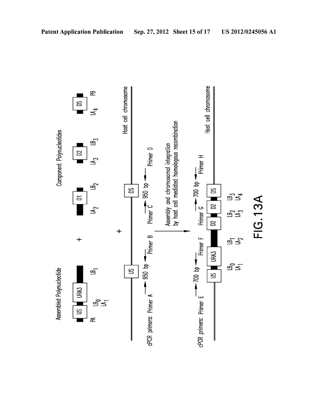 COMPOSITIONS AND METHODS FOR THE SAME ASSEMBLY OF POLYNUCLEOTIDES - diagram, schematic, and image 16