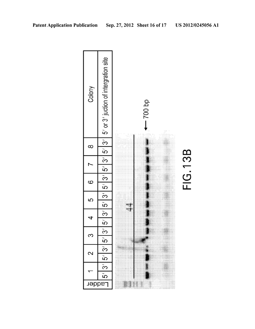 COMPOSITIONS AND METHODS FOR THE SAME ASSEMBLY OF POLYNUCLEOTIDES - diagram, schematic, and image 17