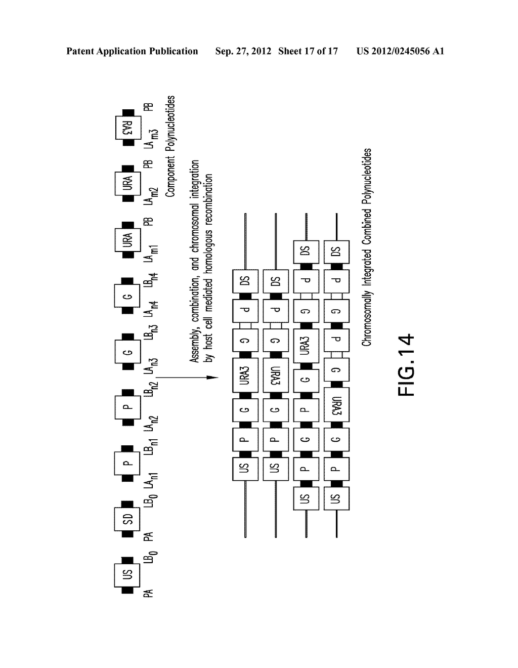 COMPOSITIONS AND METHODS FOR THE SAME ASSEMBLY OF POLYNUCLEOTIDES - diagram, schematic, and image 18
