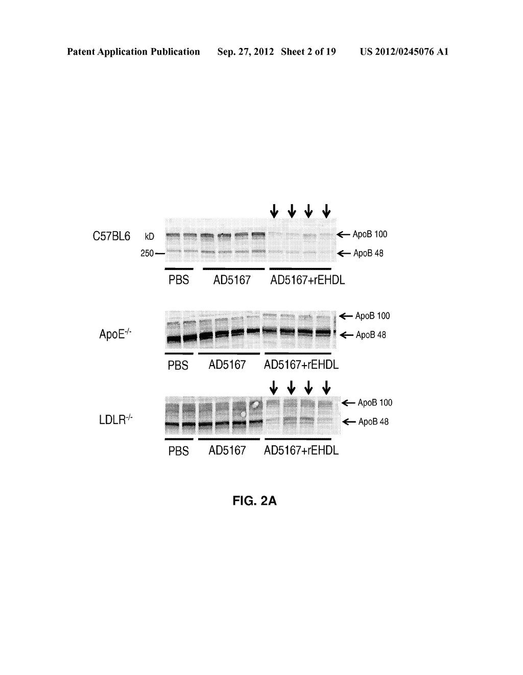COMPOSITIONS AND METHODS FOR DELIVERING RNAI USING APOE - diagram, schematic, and image 03