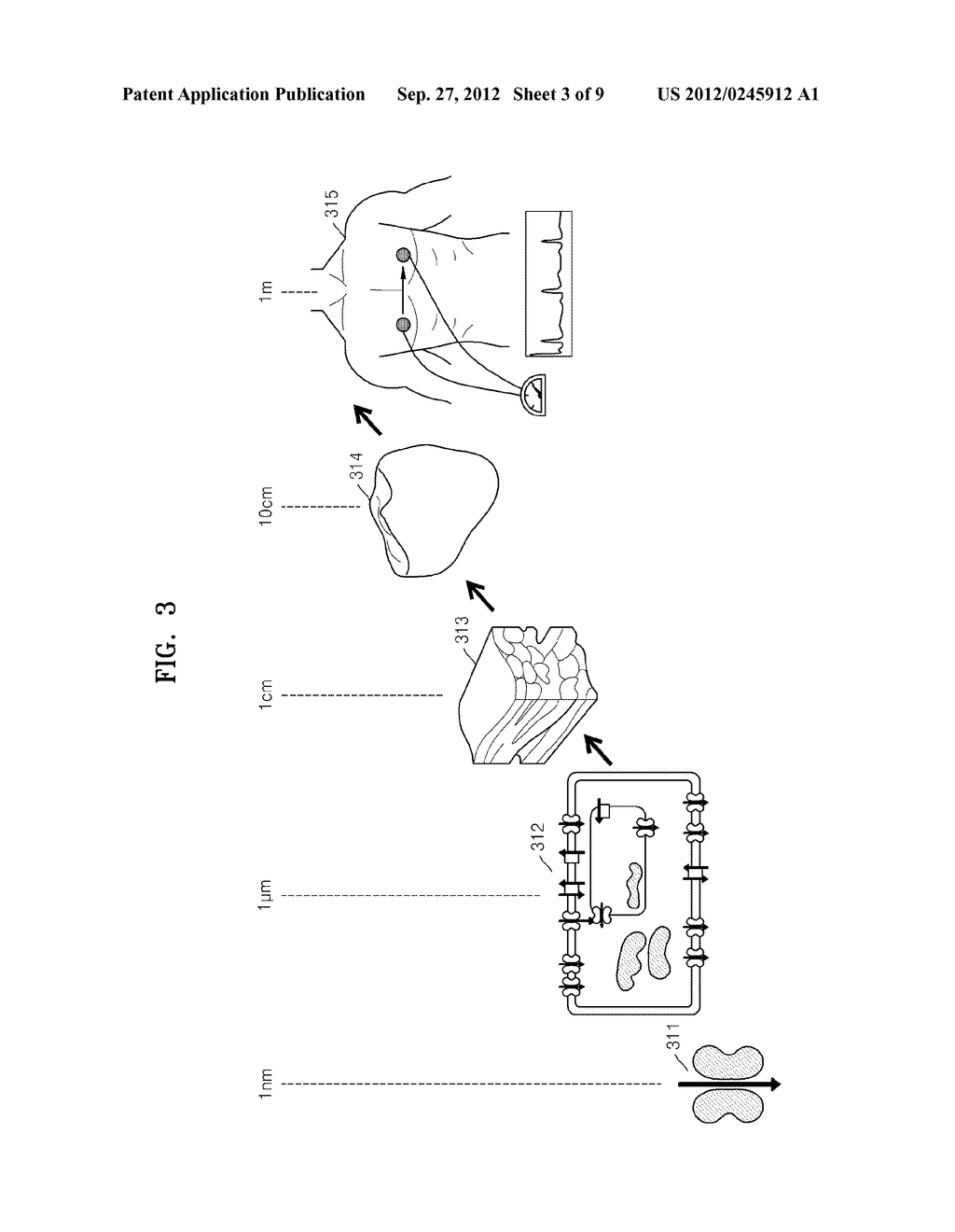 METHOD OF AND APPARATUS FOR DETERMINING OPTIMAL PARAMETERS FOR MEASURING     BIOLOGICAL SIGNALS BASED ON VIRTUAL BODY MODEL - diagram, schematic, and image 04